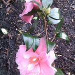 Февральские цветы